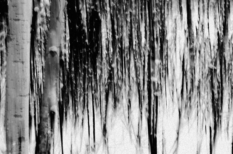 February 11, 2014<br /> <br />  Woods in Winter<br /> <br />  Elk Island Retreat<br />  Rural Alberta
