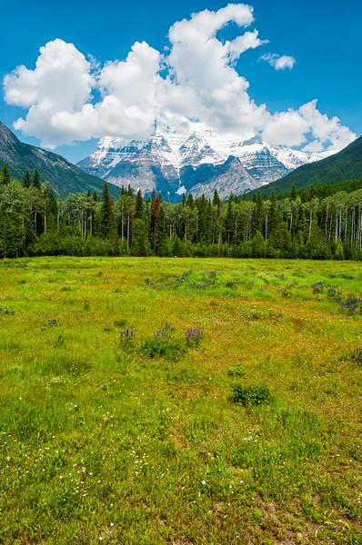 Meadow to Mountain