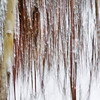 February 10, 2014<br /> <br /> Woods in Winter<br /> <br /> Elk Island Retreat<br /> Rural Alberta
