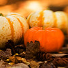 "Day Twenty-Three<br /> <br /> ""Fall Pumpkins"""