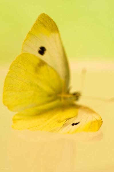 September 8, 2012<br /> <br /> Butterfly