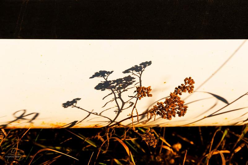Shadows & Rust