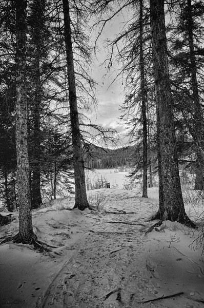 February 18, 2014<br /> <br /> Path to Pyramid<br /> <br /> Jasper National Park, Alberta