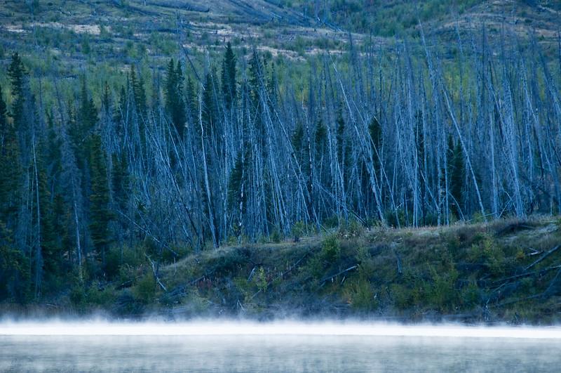 February 12, 2014<br /> <br /> Trees in the Midst<br /> <br /> Talbot Lake<br /> Jasper National Park, Alberta<br />  Rural Alberta