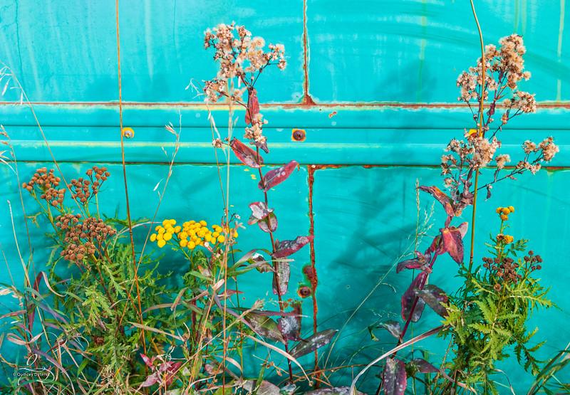 Rustic Wildflower Landscape