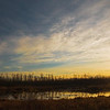 "February 9, 2011<br /> <br /> ""Warm Light""<br /> <br /> Elk Island National Park, Alberta"