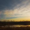 "February 9, 2011<br /> <br /> ""Warm Light""<br /> <br /> Elk Island National Park, Alberta"