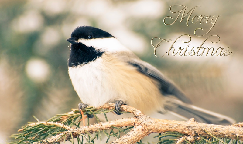 December 20, 2013  Christmas Chickadee   * 12 Days of Christmas Challenge