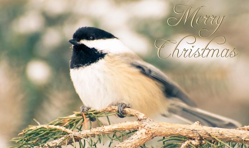 December 20, 2013<br /> <br /> Christmas Chickadee<br /> <br />  * 12 Days of Christmas Challenge