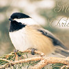 December 20, 2013<br /> <br /> Christmas Chickadee<br /> <br />  * 12 Days of Christmas Challenge