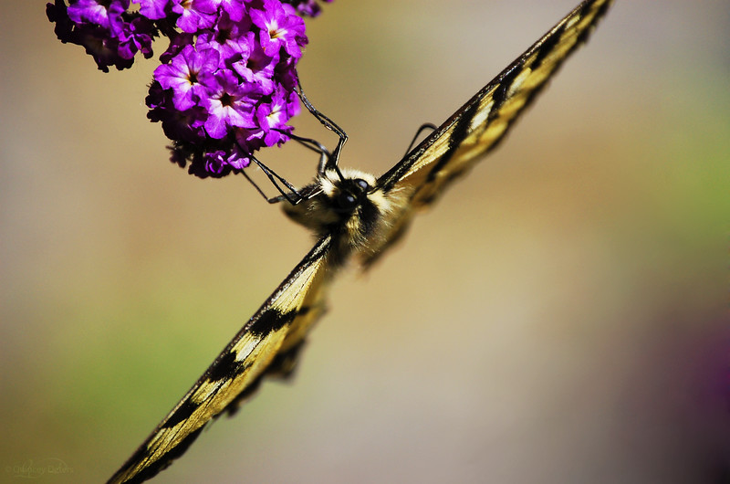 August 13, 2012<br /> <br /> Butterfly