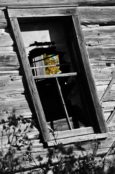 """April 23, 2012<br /> <br /> """"Fall to Pieces""""<br /> <br /> Images Alberta Camera Club Outing - Barn Shoot<br /> <br /> Near Radway, Alberta"""