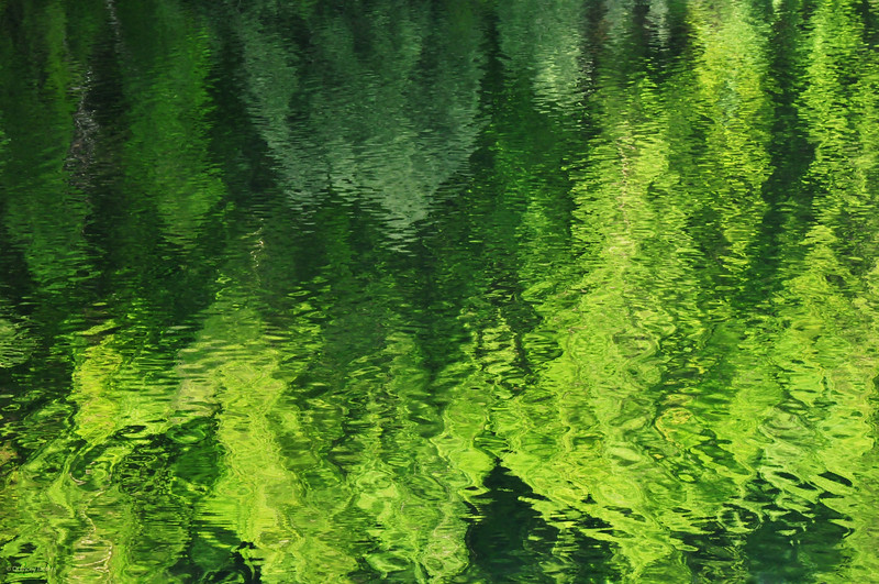 August 6, 2012<br /> <br /> Forest Reflection
