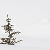 March 13, 2014  Lone Tree  Jasper National Park, Alberta