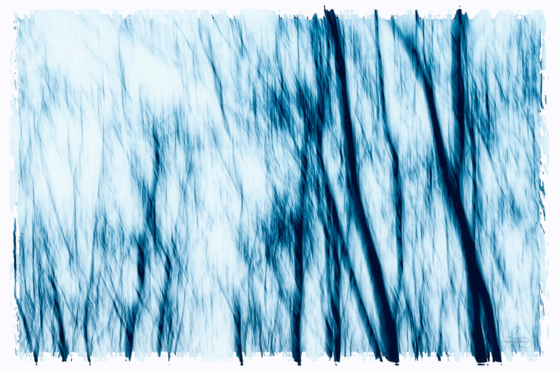 Trees in Blue