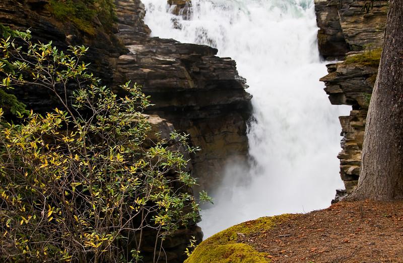 March 19, 2014<br /> <br /> Athabasca Falls<br /> Jasper National Park, Alberta<br /> <br /> #waterfallwednesday
