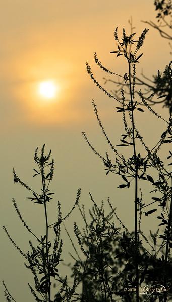"""Day Twelve<br /> <br /> """"Summer Haze""""<br /> <br /> Elk Island Retreat, Alberta"""