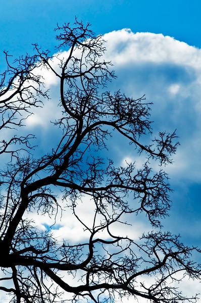March 19, 2013<br /> <br /> Tree Silhouette<br /> <br /> Hamilton, Ontario