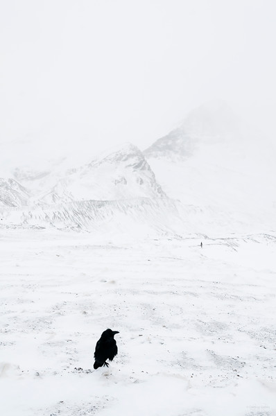 December 8, 2014<br /> <br /> The Great White North<br /> <br /> Icefields Parkway, Alberta