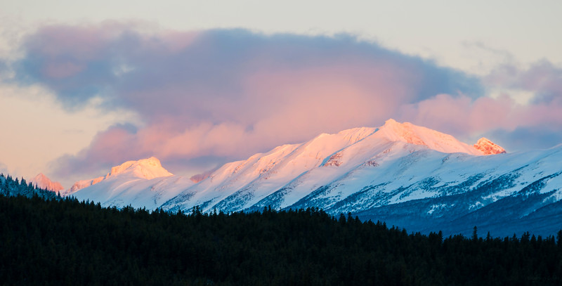January 24, 2015<br /> <br /> Pink Sunrise<br /> <br /> Victoria Cross Range<br /> Jasper National Park, Alberta<br /> <br /> J in J 2015 - Our second day in Jasper was very mild, with temperatures above zero, and often raining. This is not normal Alberta winter weather. You just never know what you will get!! I was fortunate to get some nice colour and first light on this snowy mountain range.<br /> <br /> * For the month of January I will, once again, be posting images from my annual trips to Jasper in January.
