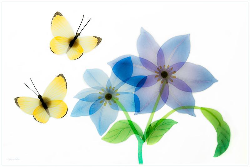 June 19, 2014<br /> <br /> Spring Creation