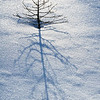 January 8, 2013<br />  <br /> Cast A Shadow<br />  <br /> * I enjoy looking for simplicity and abstracts while I am shooting grand landscapes. <br /> <br /> Jasper National Park, Alberta<br /> <br /> Jasper in January - Embrace winter!