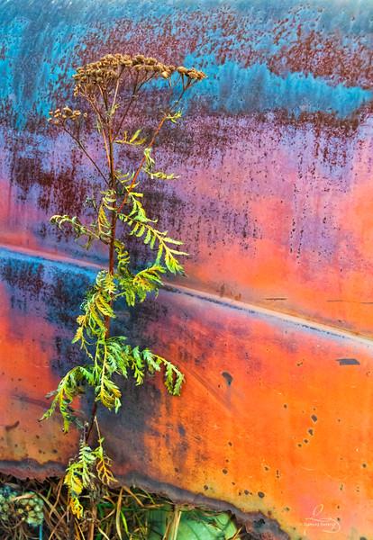 High Weeds & Rust