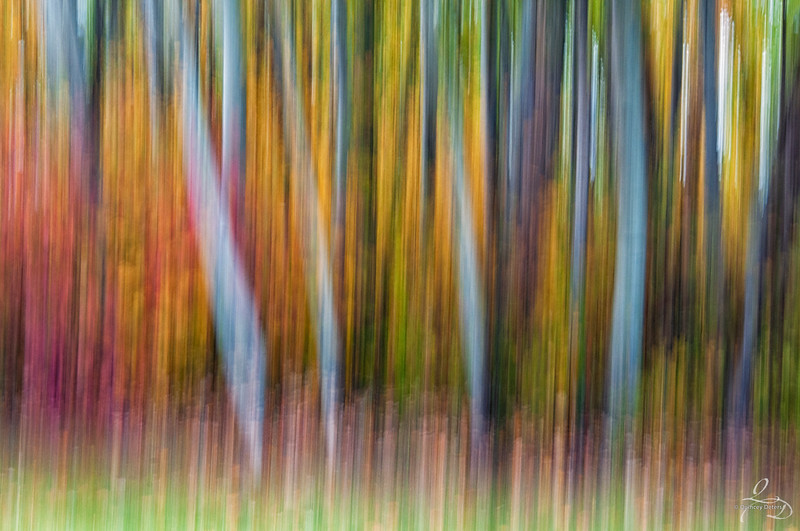 The Colour Autumn