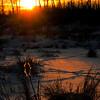 "March 13, 2011<br /> <br /> ""Winter Light""<br /> <br /> Elk Island National Park, Alberta"