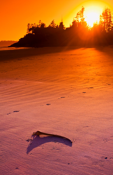 November 29, 2012<br /> <br /> Stranded<br /> <br /> Bull Kelp<br /> Mackenzie Beach<br /> Vancouver Island, B.C.