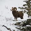 "Day Twenty-One<br /> <br /> ""His Majesty""<br /> <br /> Bighorn Backcountry<br /> Near Nordegg, Alberta"