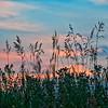 Pastel Prairies