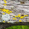 Long Live the Lichens