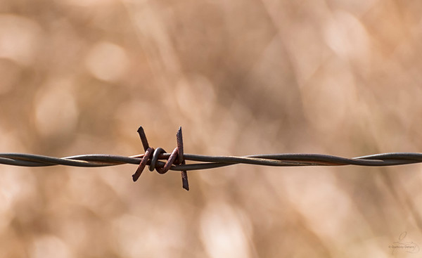 Barbed Wire