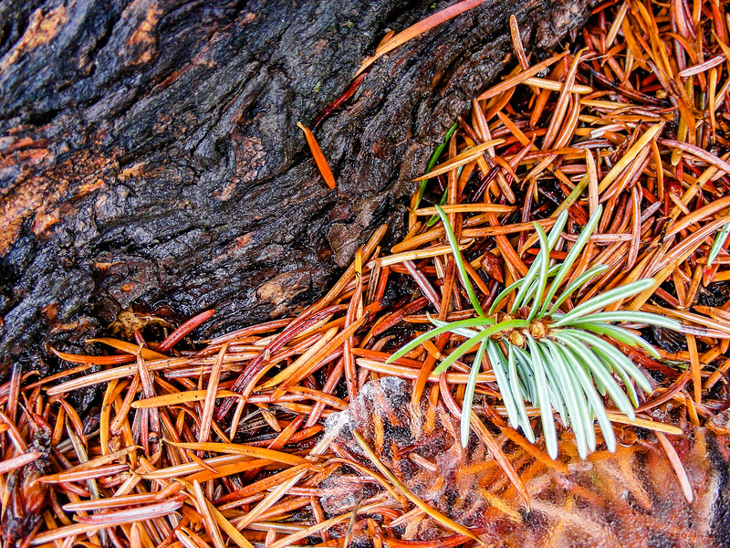 February 2, 2015<br /> <br /> Forest Floor<br /> <br /> Jasper National Park, Alberta<br /> #MacroMonday<br /> <br /> * Although this image looks very spring-like, it was taken just a week ago, while I was in Jasper. It felt like spring! Now it is snowing again. Winter is back but the ground hog said an early spring here :))))