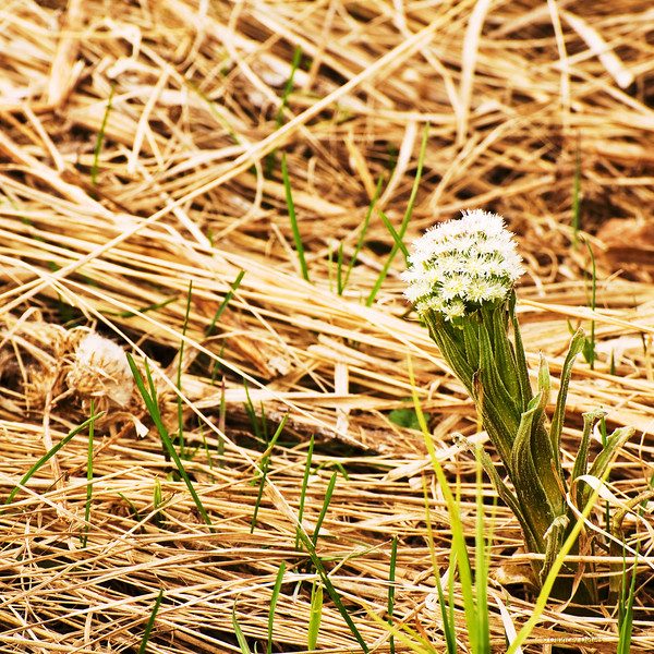"May 13, 2011<br /> <br /> ""Spring has Sprung""<br /> <br /> Elk Island National Park, Alberta"