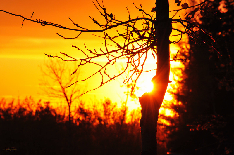 """October 19, 2011  """"Starshine""""  Elk Island Retreat Near Fort Saskatchewan, Alberta  * <i>What's In A Name?</i>~ For the month of October I am playing a <i>Name Game</i>. I am challenging myself to use a song title as the image title."""