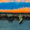 Lichen Life