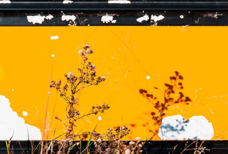 December 5, 2014<br /> <br /> Shadows & Rust<br /> <br /> Aldon Auto Salvage<br /> Lamont, Alberta