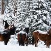 """Day Forty-Nine<br /> <br /> """"Wild Horses""""<br /> <br /> Nordegg, Alberta"""