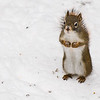 "November 10, 2013<br /> <br /> Red-tailed Squirrel<br /> <br /> * For the letter ""R"" I approached this little fella :)  <br /> I didn't have time to post yesterday, as we were packing up our trailer after a longgg camping season, but I shot for it!"