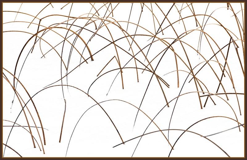 January 10, 2013<br />  <br /> Tall Grass<br />  <br /> * My friend Linda Treleaven, who has been posting abstracts to the dailies recently, inspired me to do some of my own. We have an Abstract theme for our camera club competition this month.<br />  <br /> Talbot Lake<br /> Jasper National Park, Alberta<br /> <br />  Jasper in January - Embrace winter!