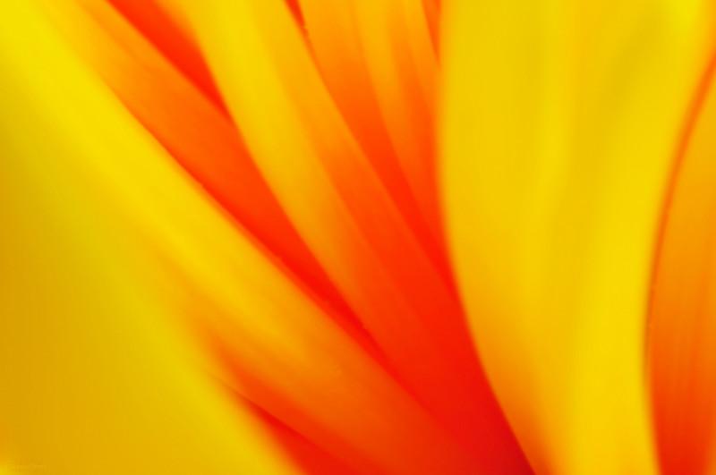 May 9, 2013<br /> <br /> Vibrant Petals