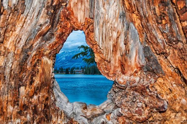 Tree Hollow