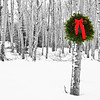 December 15, 2012<br /> <br /> Aspen Christmas<br />  <br /> I have challenged myself to post Christmas images for the next 12 days of Christmas. I hope to create a few Christmas cards for next year. I hope you enjoy the series and encourage all to join me :)<br />  <br /> * While we were in Jasper we borrowed a Christmas wreath from the bed & breakfast we stay at, took it out into the aspen forest and created some great images. This is one of them :) This is one of the Christmas cards I printed for  this year.