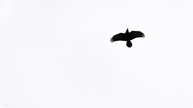 March 7, 2014<br /> <br /> The Raven<br /> <br /> * Simple, and I love it :)