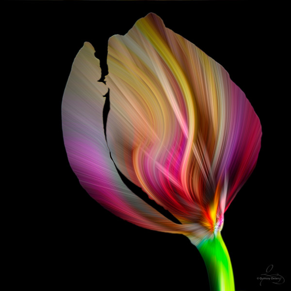 Twirl in a Tulip