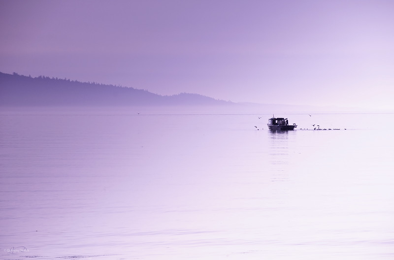 """May 4, 2011  """"Misty Mood""""  Sidney, B.C.  * I was in serious need of an <i>Island Moment</i> today :) I took this image last June when we were visiting Vancouver Island."""