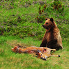 "October 17, 2011  ""Another One Bites The Dust""  Near Grande Cache, Alberta  * <i>What's In A Name?</i>~ For the month of October I am playing a <i>Name Game</i>. I am challenging myself to use a song title as the image title.  (Alternate Name: Grizzly Discovery)"