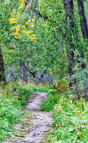 Nature Trail on the Bow River